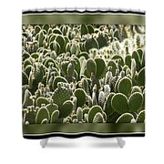 Canvas Of Cacti Shower Curtain