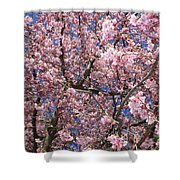 Canvas Of Pink Blossoms Shower Curtain