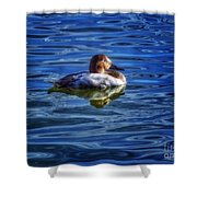 Canvasback And Blue Shower Curtain