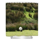 Caora  Shower Curtain