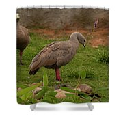 Cape Barren Geese Facing Right Shower Curtain