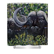 Cape Buffalo First Painting Shower Curtain