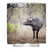Cape Buffalo In A Clearing Shower Curtain