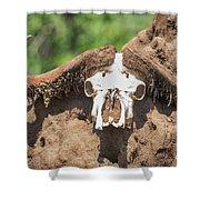Cape Buffalo Skull Shower Curtain