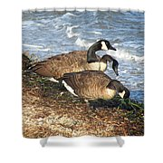 Cape Cod Beachcombers 1 Shower Curtain