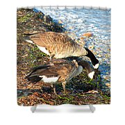 Cape Cod Beachcombers 2 Shower Curtain