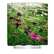 Cape Daisies And Angel Hair Shower Curtain