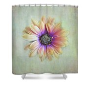 Cape Daisy Looking Up Shower Curtain