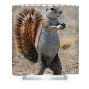 Cape Ground-squirrel  Shower Curtain