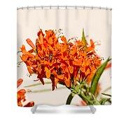 Cape Honeysuckle - The Autumn Bloomer Shower Curtain