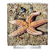 Cape May Starfish Shower Curtain