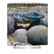 Cape Rock Lizard Shower Curtain