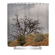 Capitol Reef 9553 Shower Curtain