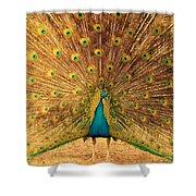 Captain Peacock Shower Curtain