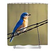 Captivating Blue Shower Curtain