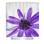 Captivating Shower Curtain