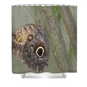 Captivating Photo Of A Brown Morpho Butterfly Shower Curtain