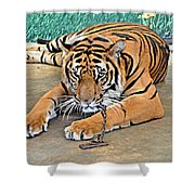 Captive And Bored Shower Curtain