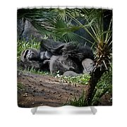 Captivity Is Heartbreaking Shower Curtain