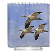 Captured Flight Of  Snow Geese Shower Curtain