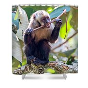 Capuchin Monkey Chewing On A Stick Shower Curtain