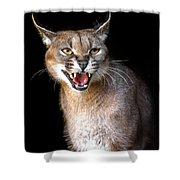 Caracal Hissy Fit Shower Curtain