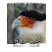 Caracara Bird Shower Curtain