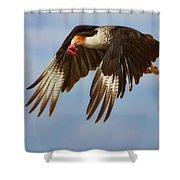 Caracara In Flight Shower Curtain
