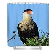 Caracara Portrait Shower Curtain