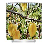 Carambola Fruit On The Tree Shower Curtain