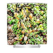 Carambola  Shower Curtain