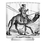 Caravan: Dromedary Shower Curtain