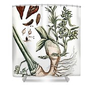 Cardamom, 1735 Shower Curtain