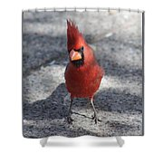 Cardinal 032714a Shower Curtain