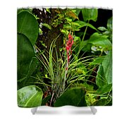 Cardinal Airplant Shower Curtain
