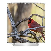 Cardinal Among The Branches Shower Curtain