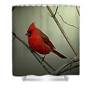 Cardinal And The Setting Sun Shower Curtain