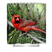 Cardinal Attitude Shower Curtain