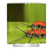 Cardinal Beetle  Shower Curtain