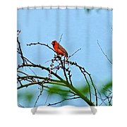 Cardinal Calling Shower Curtain