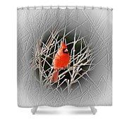 Cardinal Centered Shower Curtain