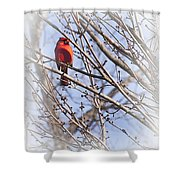 Cardinal I Shower Curtain