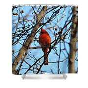 Cardinal II Shower Curtain