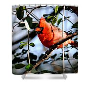Cardinal IIi Shower Curtain