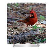 Cardinal In Charge Shower Curtain by Julie Cameron