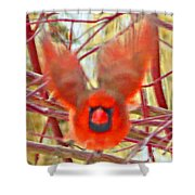 Cardinal In Flight Abstract Shower Curtain