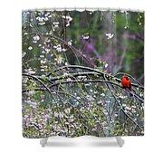 Cardinal In Flowering Tree Shower Curtain