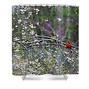 Cardinal In Flowering Tree Shower Curtain