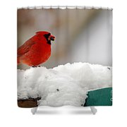 Cardinal In Snow Shower Curtain