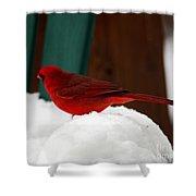 Cardinal In Snow II Shower Curtain